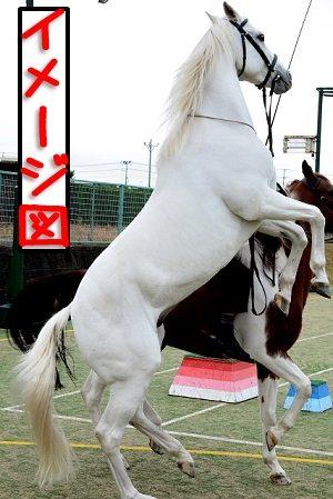 お馬さんヒヒーン