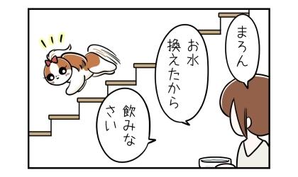 犬のお椀の水を新しく換えて、お水換えたから飲みなさい。と声をかけたら