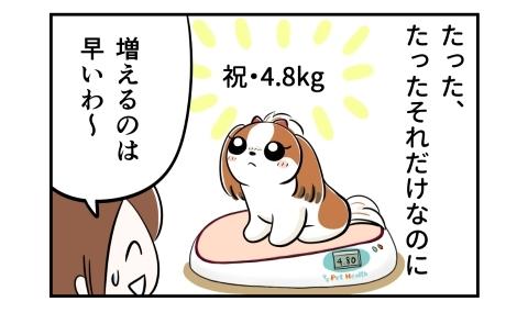 たったそれだけなのに、犬の体重は目標だった4.8キロに。体重が増えるのは早いわ~