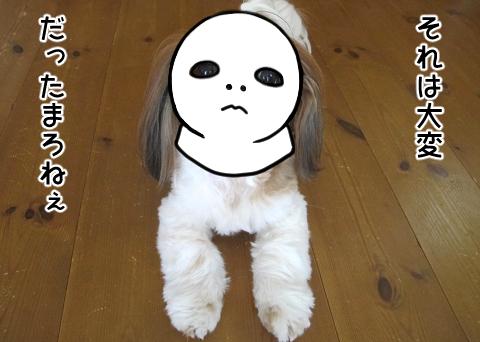 スケキヨと化したシーズー犬まろん