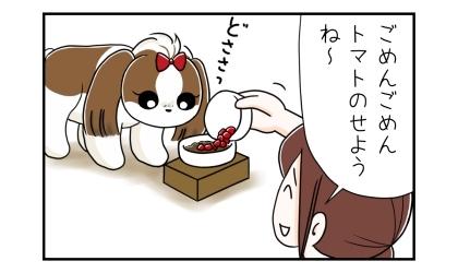 犬のご飯(ドッグフード)に刻んだトマトをトッピングしせながら、ごめん、トマトのせようね~