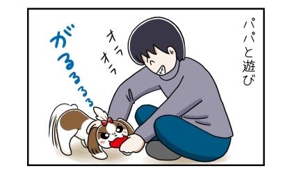 パパと遊び。パパとおもちゃで遊ぶ犬