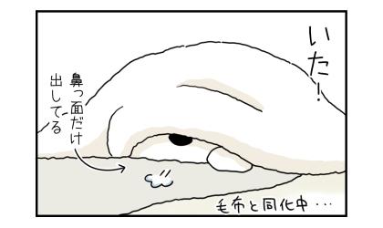 いた!毛布の中に潜り込んで寝ていた犬。鼻っ面だけ出してる。毛布と同化中…