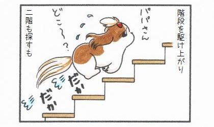 犬は階段を駆け上がり、二階も探すも。パパさん、どこ~?階段を上る犬