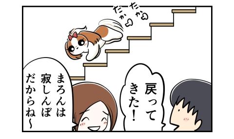 階段を下りてくる犬。戻ってきた!寂しんぼだからね~