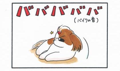 犬がリビングで寝ている。そこにバイクの音がした!