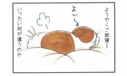 まろんの寝床づくり-4