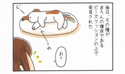 後日、そのトマトの種が犬の寝床であるビーズクッションから発見された