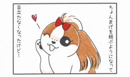 犬がちょんまげを結ぶようになって、目立たなくなったけど