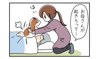お母さんが起きろってー。犬を父の布団の上に乗せる