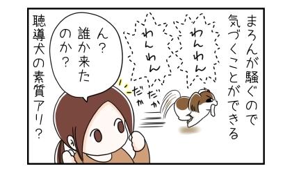 インターホンの音で犬が騒ぐので気づくことができる。聴導犬の素質アリ?イヤホンを外して、誰か来たのか?