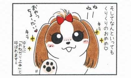 シーズーの魅力-4