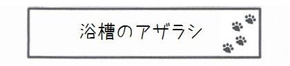 浴槽のアザラシ-0