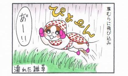 犬は草むら(濡れた雑草)に飛び込み。あー!驚く飼い主