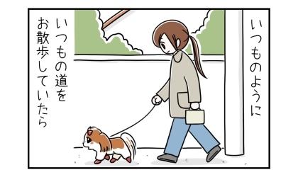 犬といつものようにいつもの道をお散歩していたら