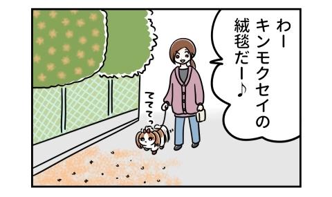 犬の散歩中 わーキンモクセイの絨毯だー♪