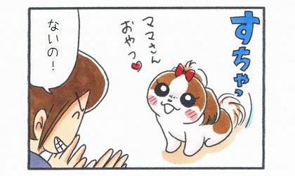 犬が目の前でおすわりしておやつをおねだり。ないの!