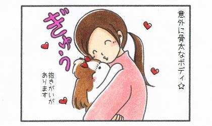 シーズーの魅力-2