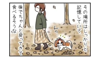 カラスは食べ物を埋めた場所はしっかりと記憶していて、後でちゃんと戻ってきて食べるそうな。公園を散歩する犬と飼い主