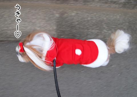 サンタと化したシーズー犬まろん
