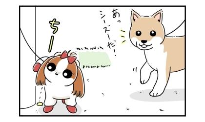 あっ、シーズーだ!柴犬が電柱におしっこをしているシーズーを発見