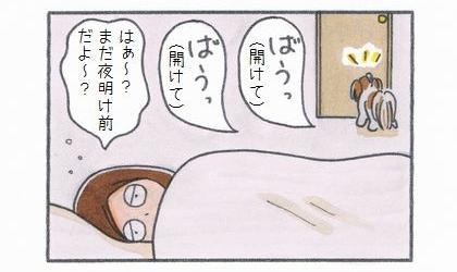 犬が寝室のドアを開けろと吠えている。はぁ~?まだ夜明け前だよ~?