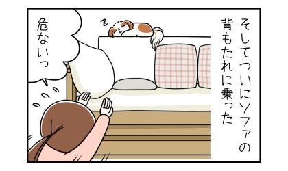 そしてついにソファの背もたれの上に乗った。背もたれの上で寝る犬。危ないっ、思わず手を差し出す飼い主