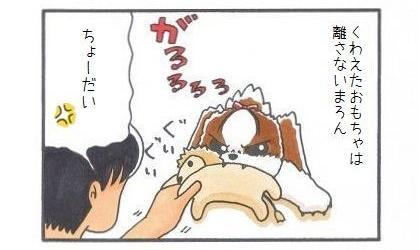 まろちゃんぺ-1