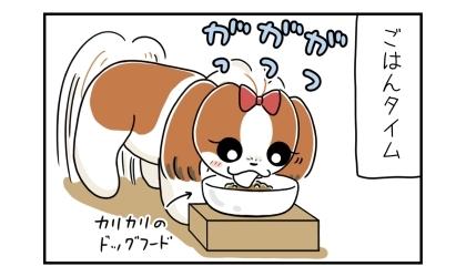 ご飯の時間。カリカリのドッグフードをがつがつと早食いする犬