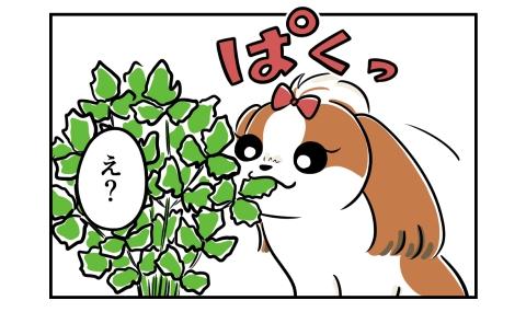 ぱくっとパクチーの葉を食べた犬。え?と驚く私