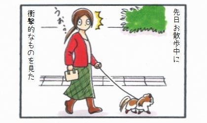 先日犬のお散歩中に衝撃的なものを見た