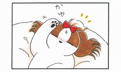 犬が耳が痒くて起きる