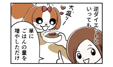 逆ダイエットと言っても、単にご飯の量を増やしただけ。大盛りご飯に犬は大喜び