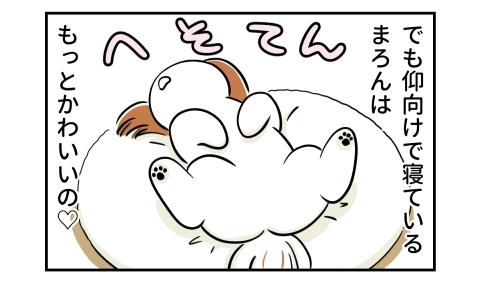 でも仰向けで寝ている犬は、もっとかわいいの。へそてん