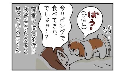 しっぽを振りながら吠えて夜食の催促をする犬。今リビングで食べてきたでしょぉ~?寝室では無条件に夜食をもらえると思っている犬