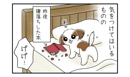 犬に本を噛まれないように気をつけてはいるものの。昨夜寝落ちした本を噛む犬