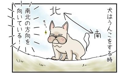犬はうんこをする時、南北の方向を向いている!北を向いてうんこをするフレンチ・ブルドッグ