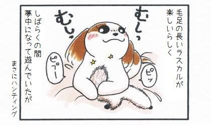 犬は毛足の長いおもちゃのラスカルが楽しいらしく、しばらくの間夢中になって遊んでいたが