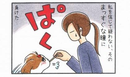 飼い主を信じて疑わない、その犬のまっすぐな目に負けた。犬におやつをあげる飼い主