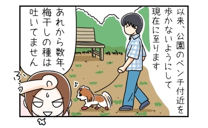 以来、公園のベンチ付近を歩かないようにして現在に至ります。あれから数年、犬は梅干しの種を吐いてません