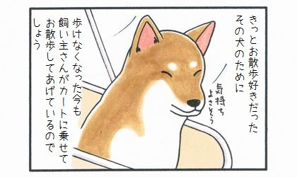 カートに乗った犬-3