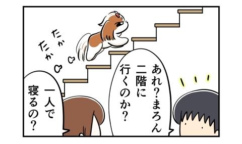 階段を昇る犬。あれ?二階に行くのか?一人で寝るの?
