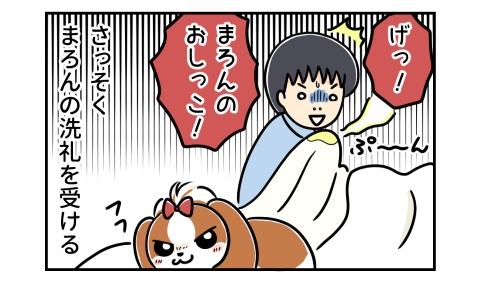 げっ!犬のおしっこ!さっそく犬の洗礼(マーキング)を受ける