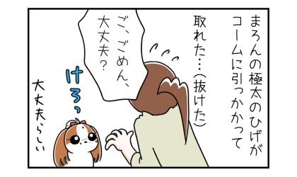 犬の極太のひげがノミ取りコームに引っかかって取れた…(抜けた)ご、ごめん、大丈夫?けろっとしている犬、大丈夫らしい