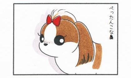 シーズーの魅力-1
