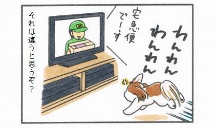 インターホンの音はテレビの音だった。テレビに向かって吠える犬、それは違うと思うぞ?