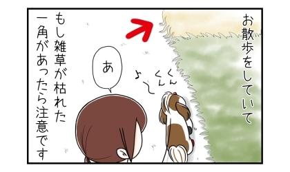 犬のお散歩をしていて、もし雑草が枯れた一角があったら注意です