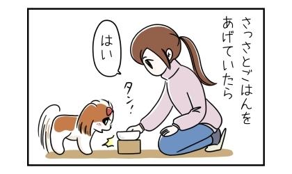 犬にさっさとご飯をあげていたら。ご飯をもらってうれしそうな犬