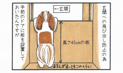 犬の玄関への飛び出し防止の為、手前のドアに高さ45cmの板を設置して置いたんですが