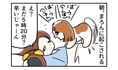 朝、犬に起こされる。さんぽ!ごはん!え?まだ5時20分?早いじゃーん